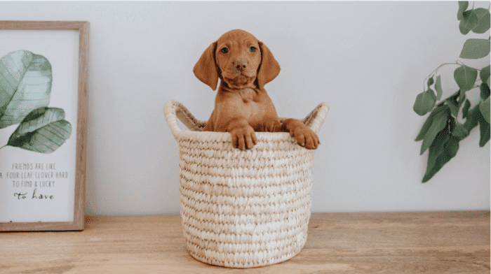Puppy Training And Socialization: The How-To Guide