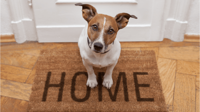 Having Pets In Rented Property: New Tenancy Rules