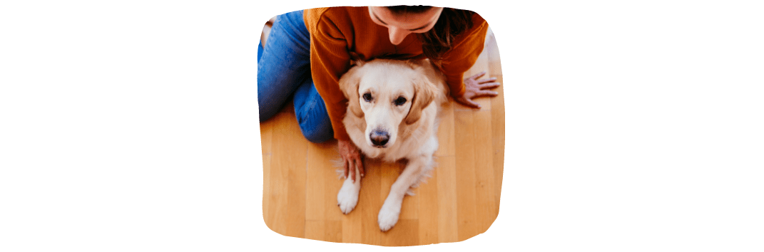 Having Pets In Rented Property