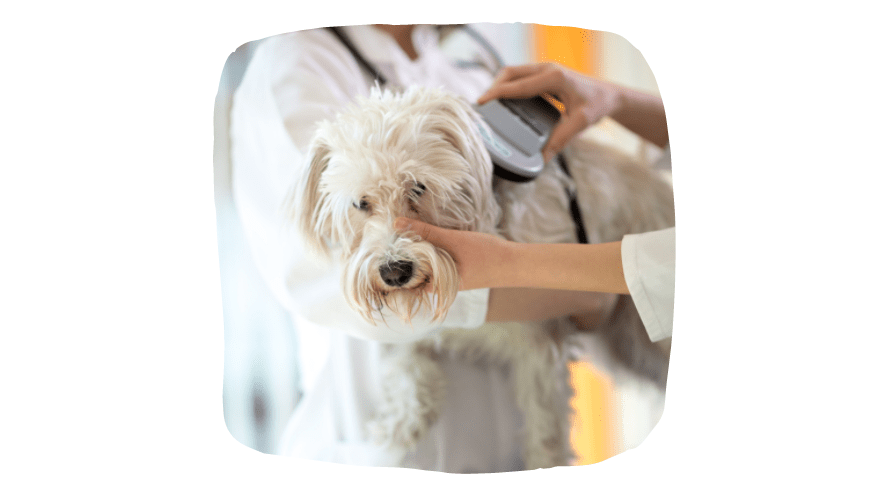 microchipping your dog