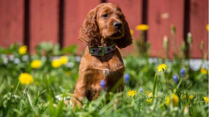 Puppy Time In Spring: 5 Ways To Have Fun Together
