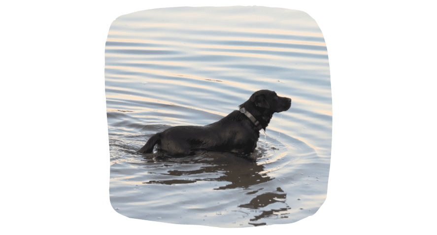 Puppy Time In Spring: Dog in River