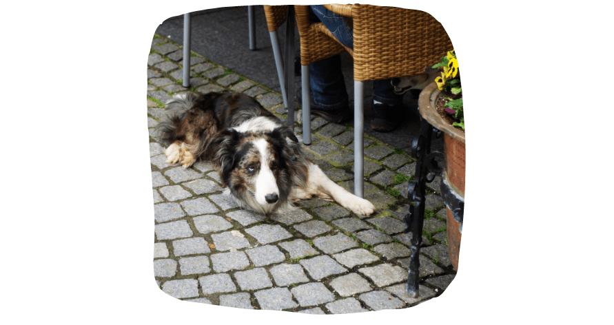 dog sat at a cafe