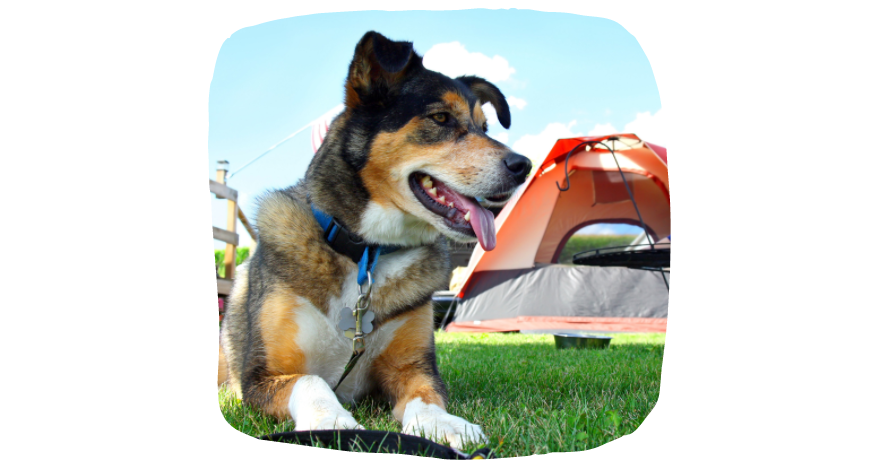 Puppy Time In Spring: Camping