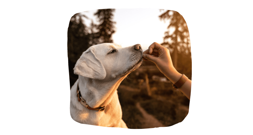 socialize your puppy - meet friends outdoors