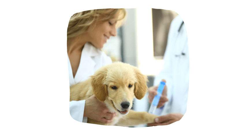 socialize your puppy - get them vaccinated first