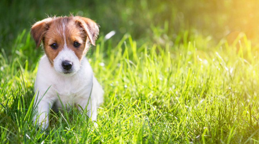 5 Ways To Socialize Your Puppy Before Lockdown Ends