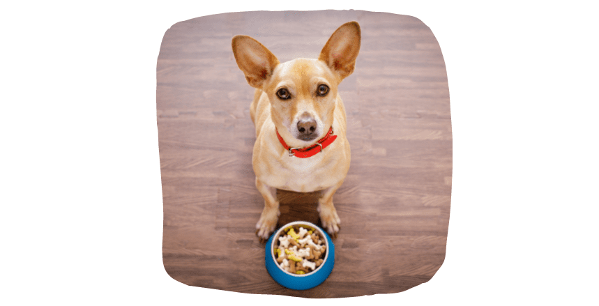 good food to make your dog happy