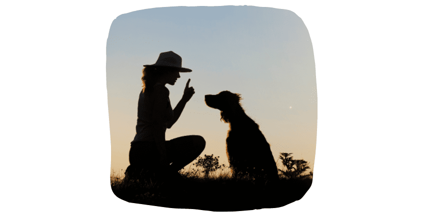 make your dog happy - education
