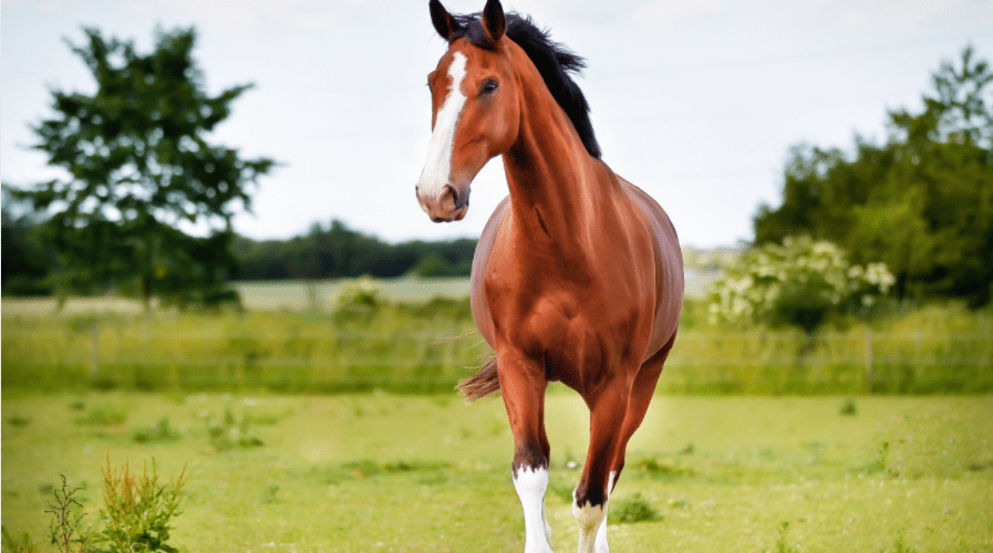 Horse Care And Riding: Our Top Tips