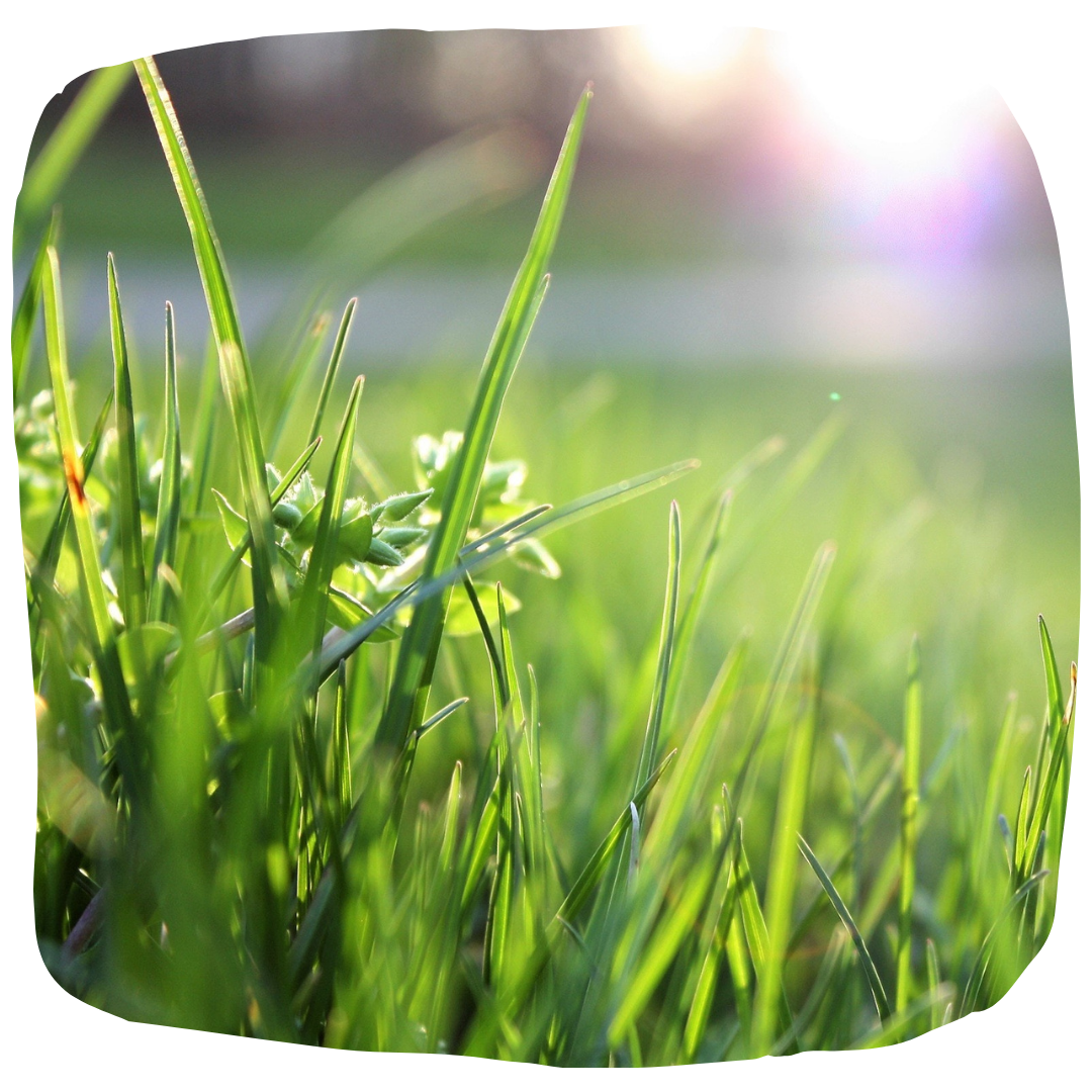looking after your lawn