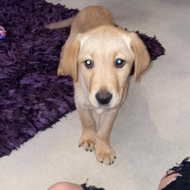 Buying a puppy? 'Justice For Reggie' Are Here To Help