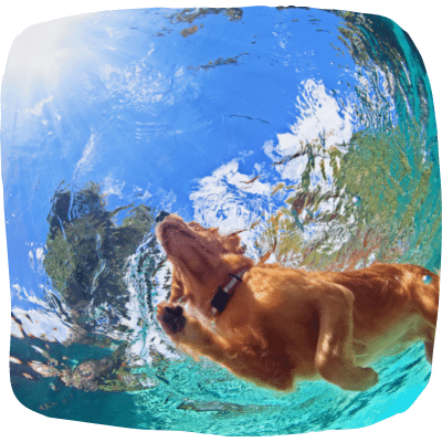 dog keeping cool by swimming