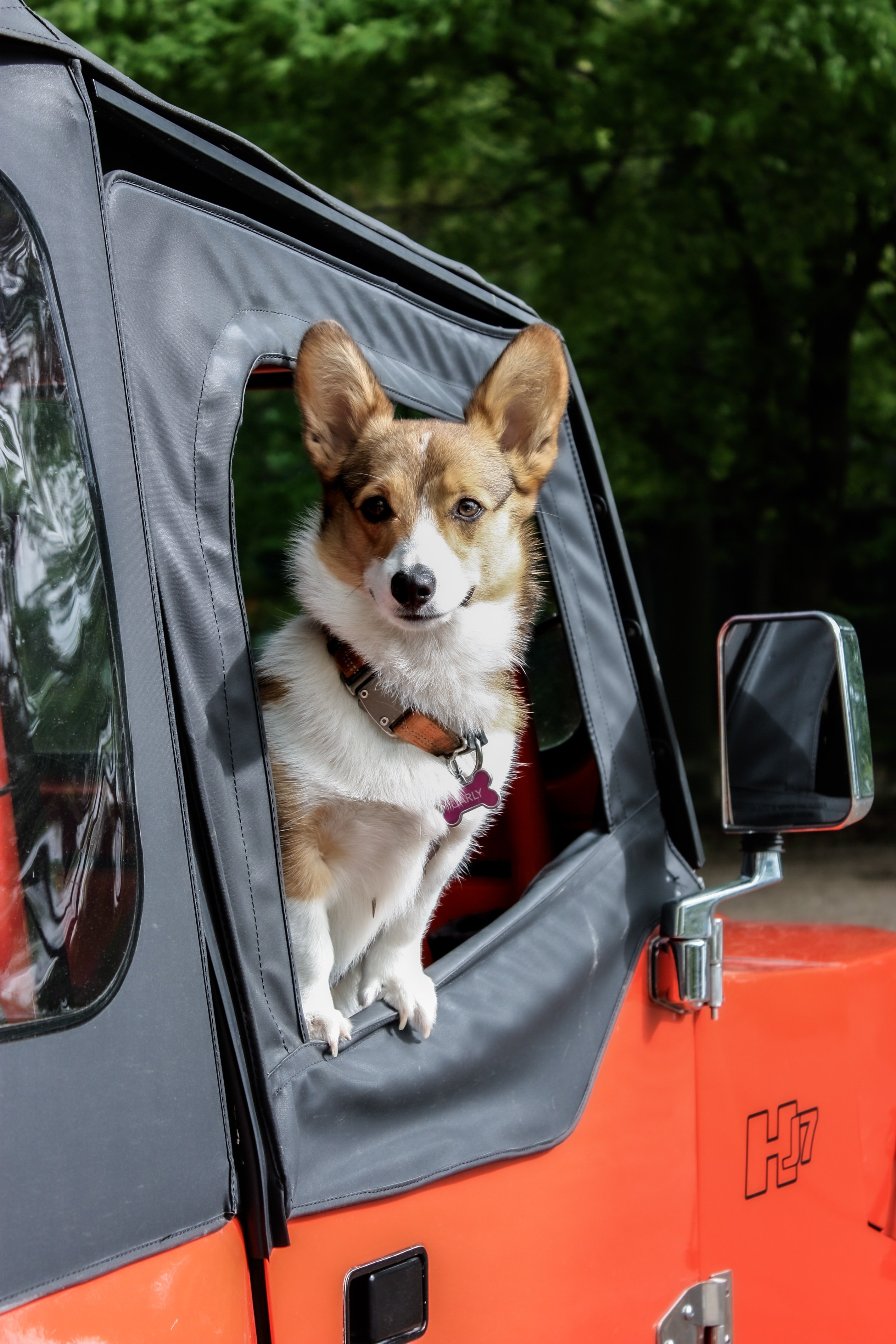 Packing Essentials For The Pawfect Pet-Friendly Holiday