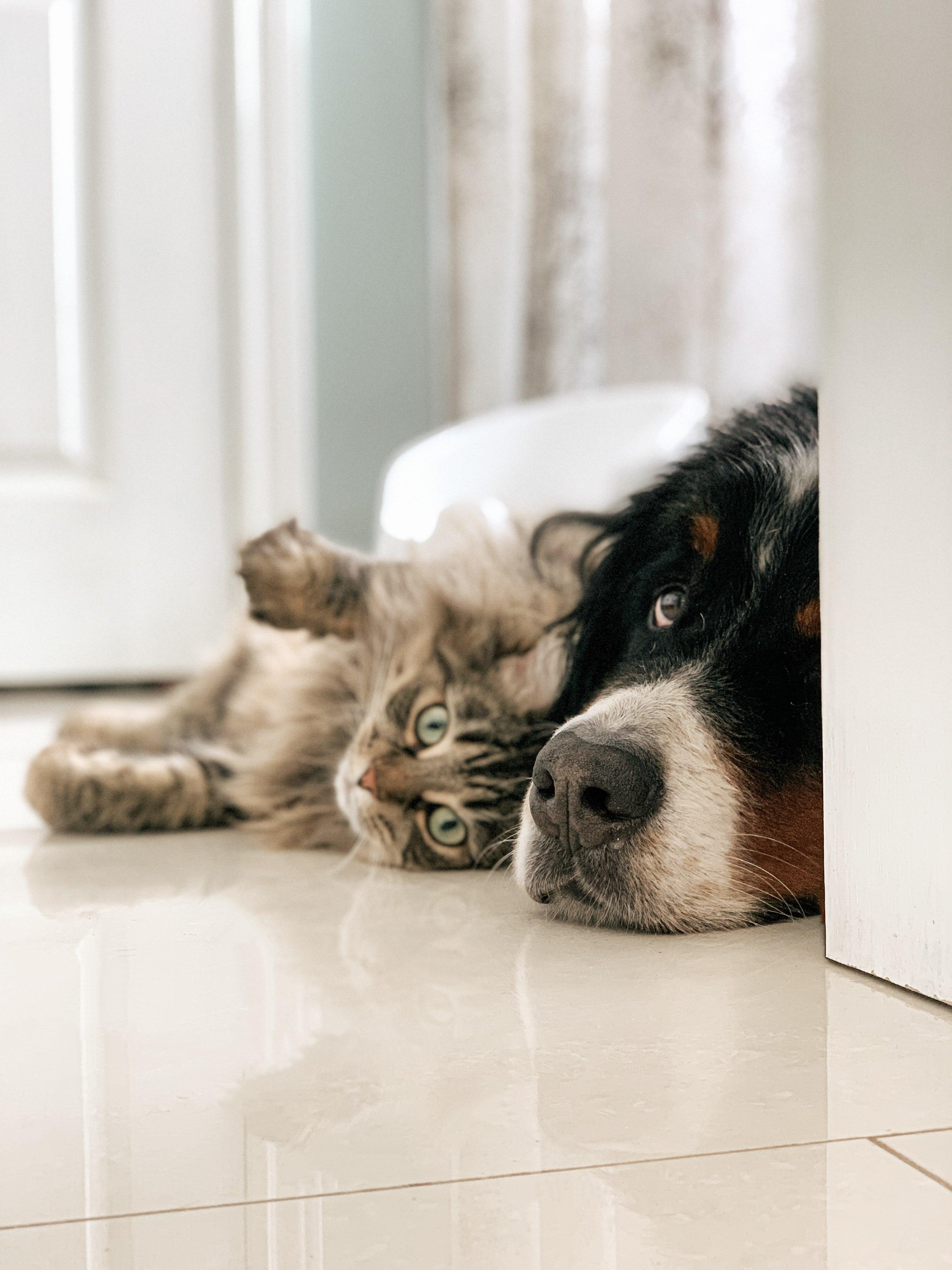 Preventing Pet Seller Scams On Preloved