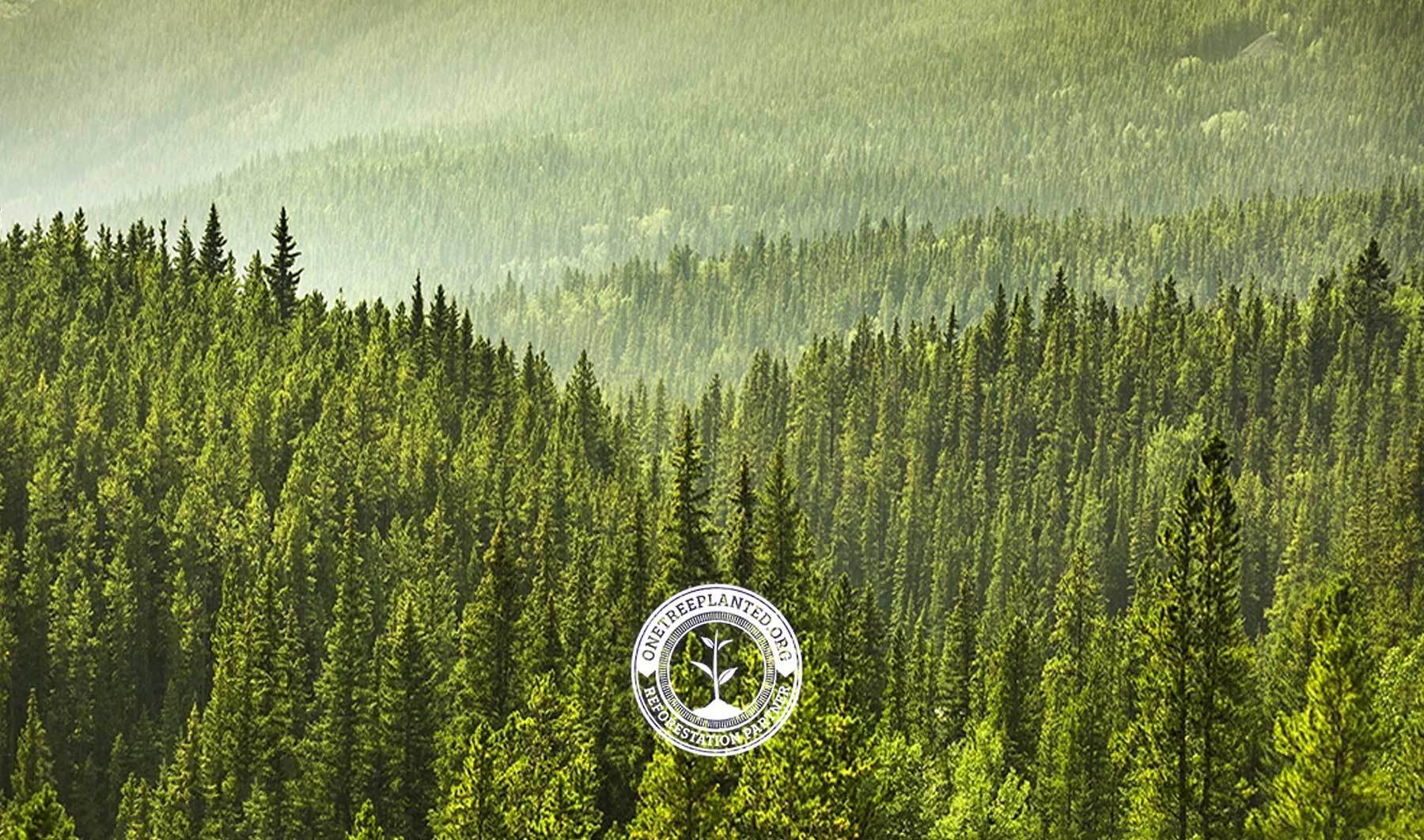 Tree Planting: Why Does It Matter?