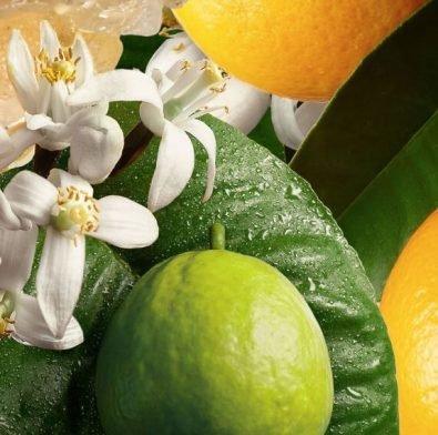 柑橘和佛手柑