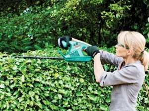Hedge being trimmed with hedge trimmer