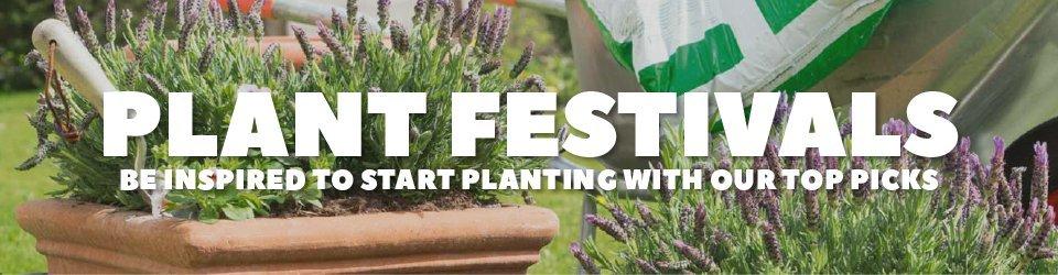 Plant Festivals