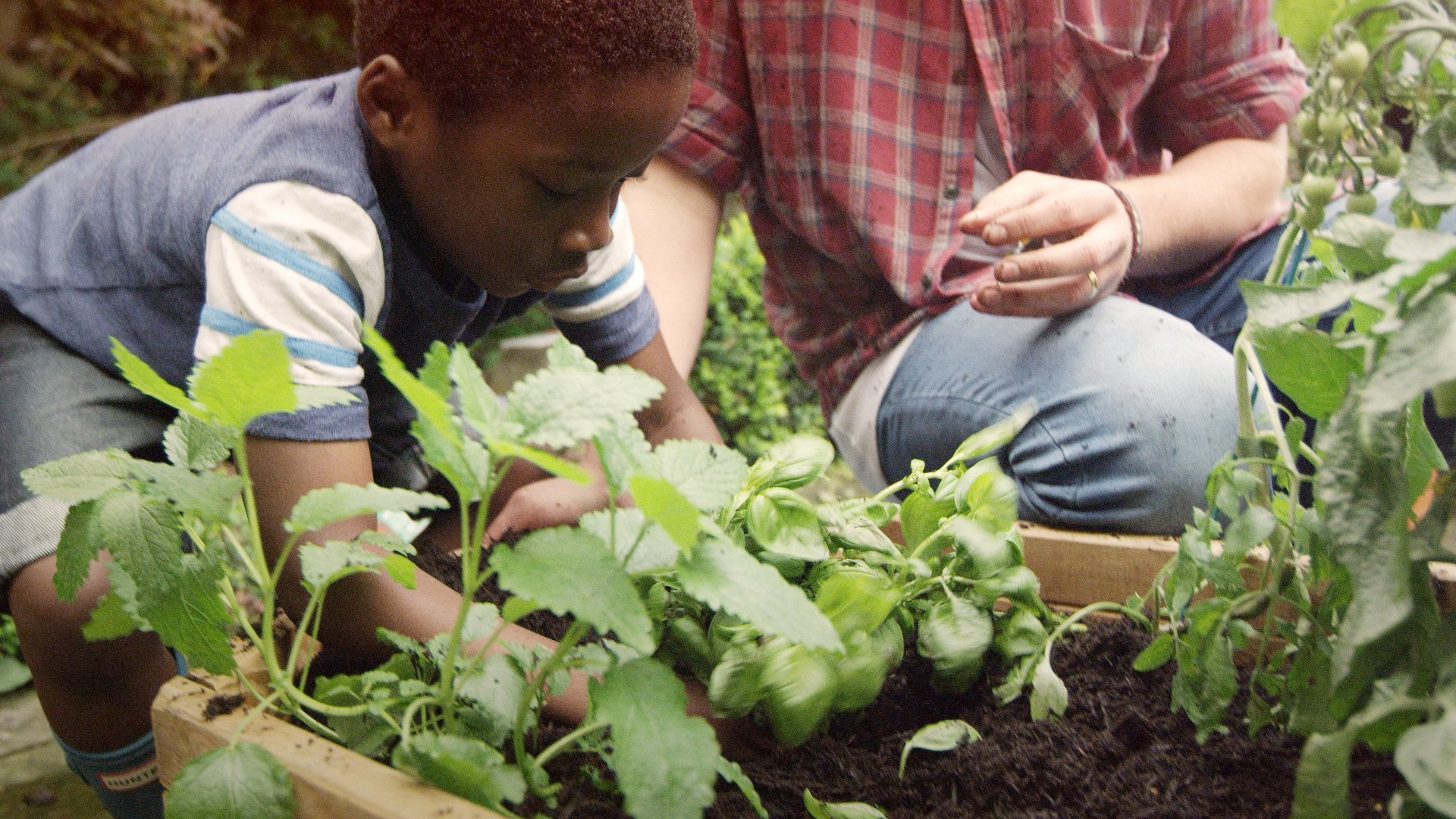 How to Make a Mini Vegetable Garden with Kids