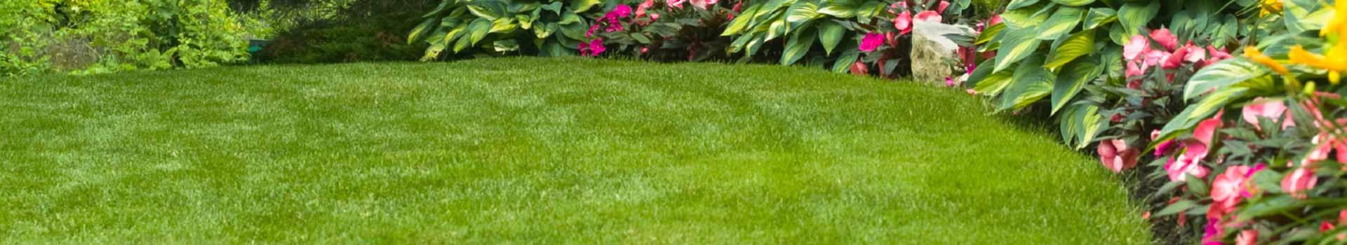 Create A New Lawn