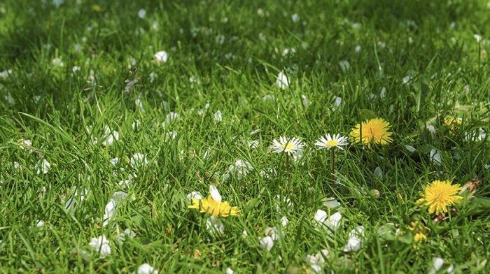 Lawn Blog – August