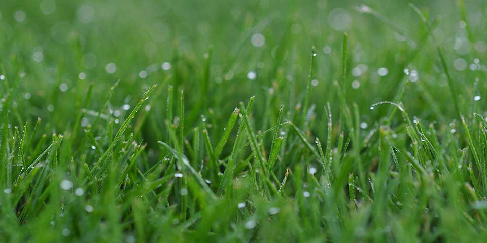 Lawn Blog – July