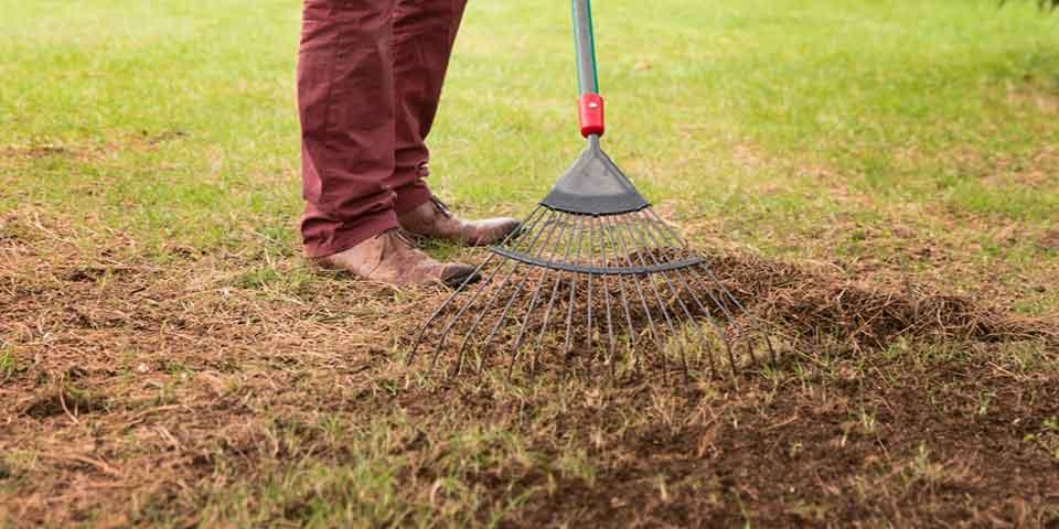 Lawn Blog – December
