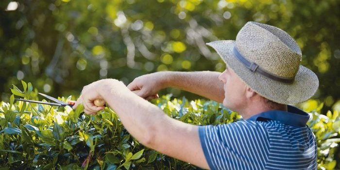Garden Hand Tools Buying Guide