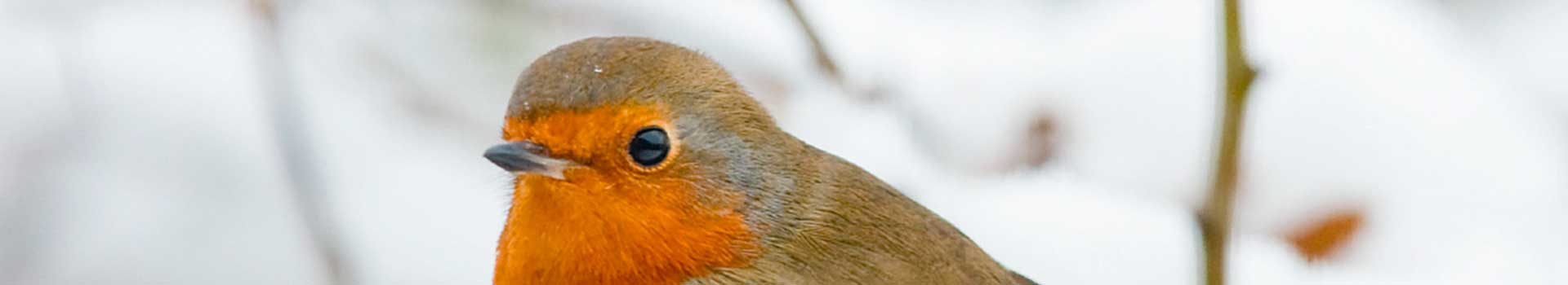 How To Look After Garden Birds In Winter
