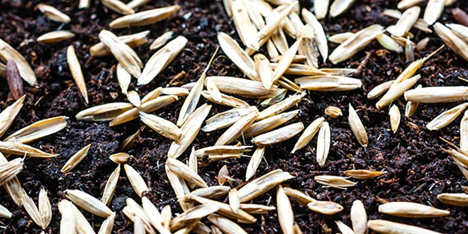 How To Create A New Lawn From Seed
