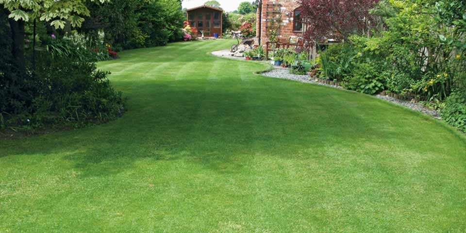 How To Maintain Your Lawn In Spring