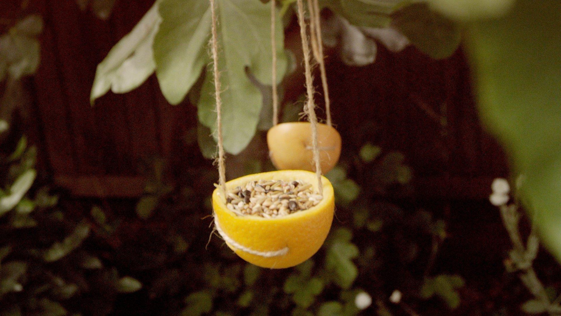 How To Make a Citrus Bird Feeder