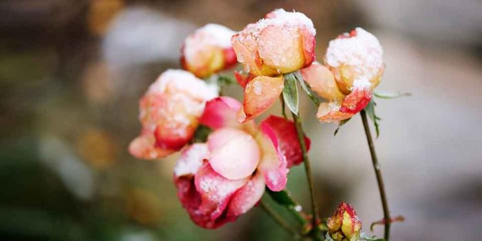 How To Protect Plants In Cold Weather