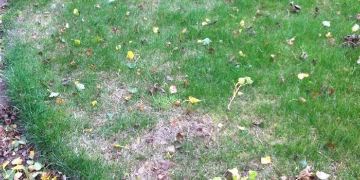 Lawn Blog - October