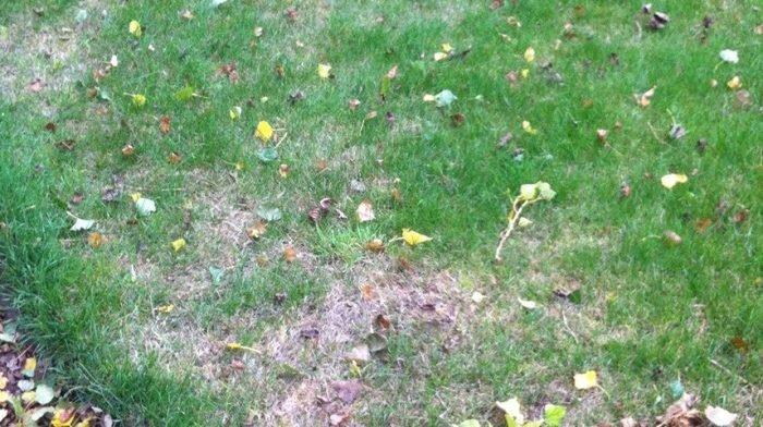 Lawn Blog – October