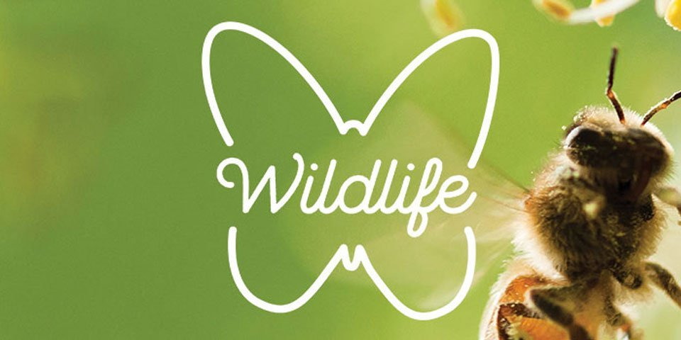 Create A Garden For Wildlife