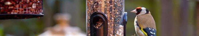 How To Look After Garden Birds – Bird Feeders and Bird Food