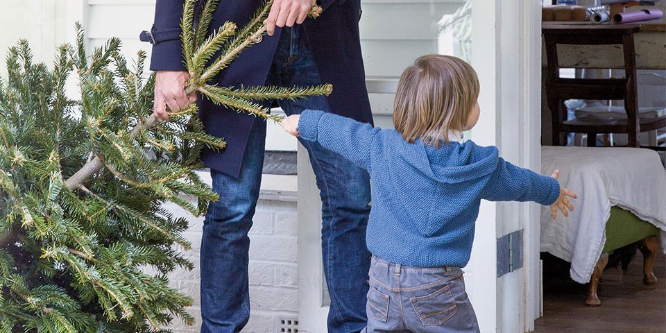 How to Plant Your Christmas Tree