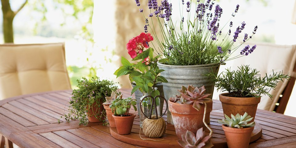 Pots Planters And Hanging Baskets Buying Guide