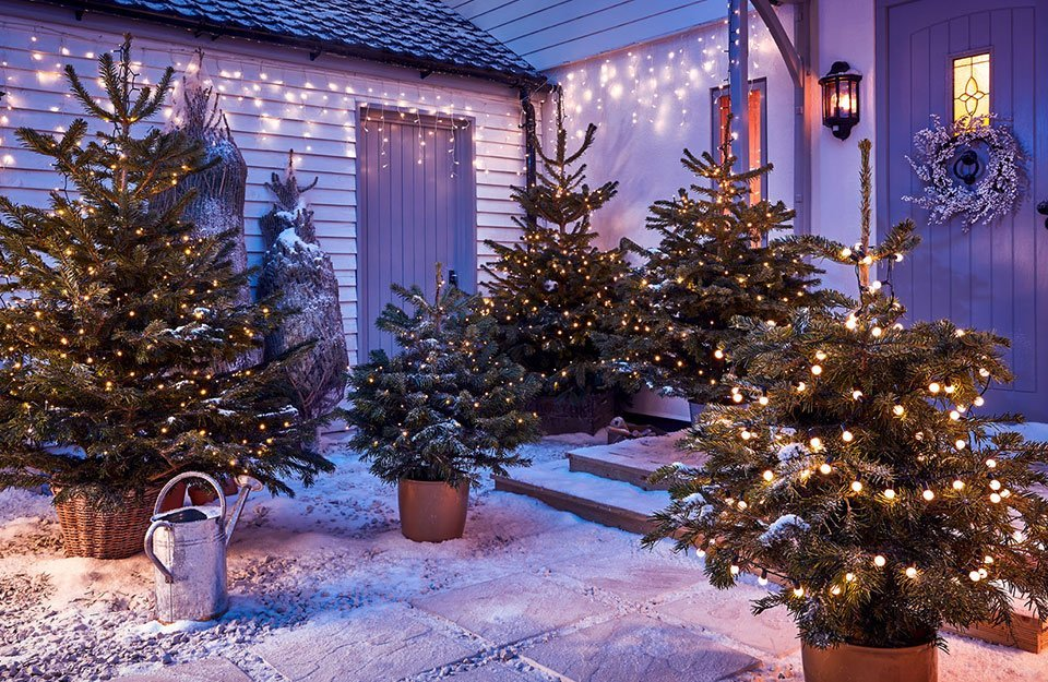 How to Choose the Best Real Christmas Tree