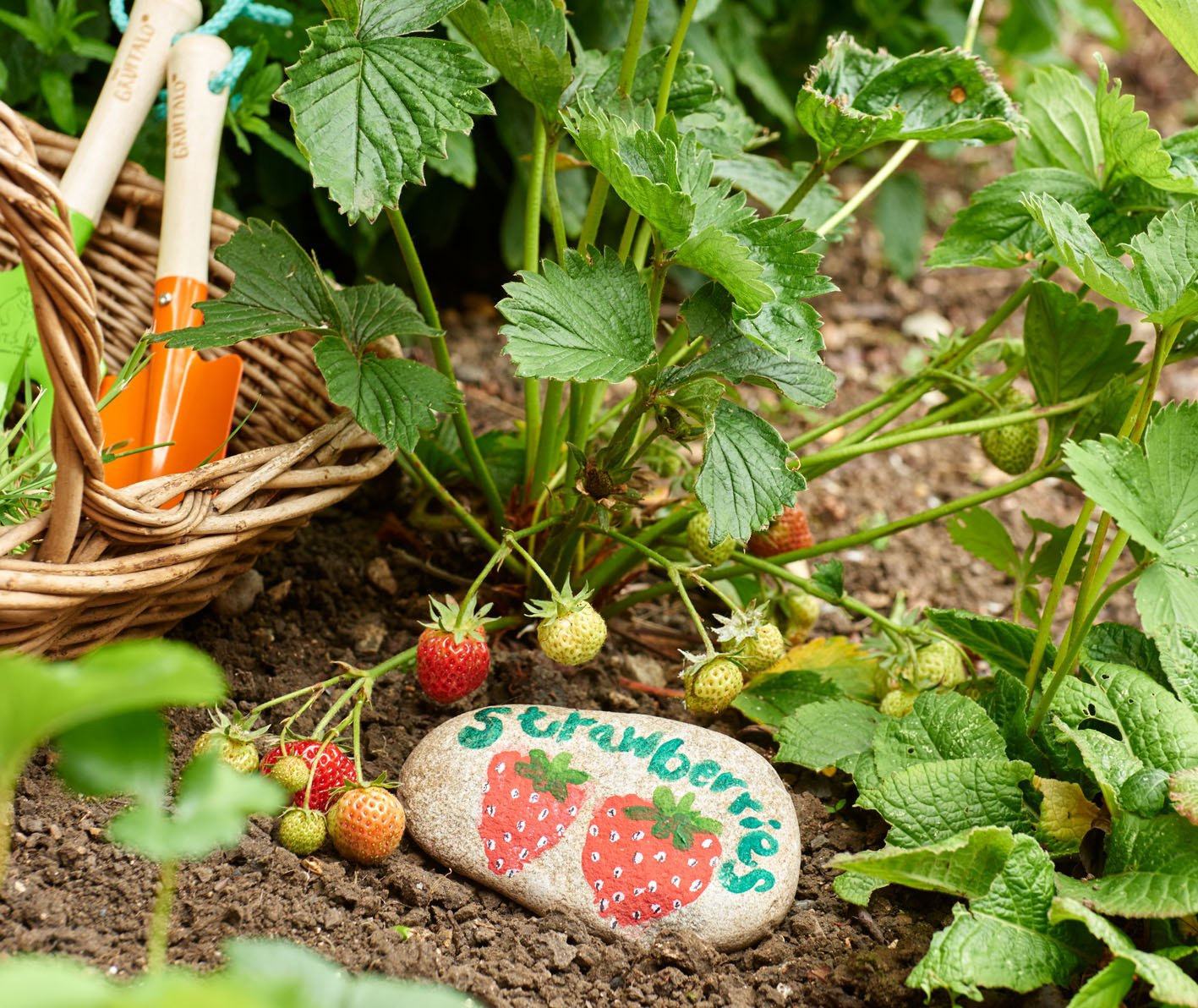 Grow Your Own Create A Veg Patch In Your Garden