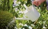 Gardening essentials