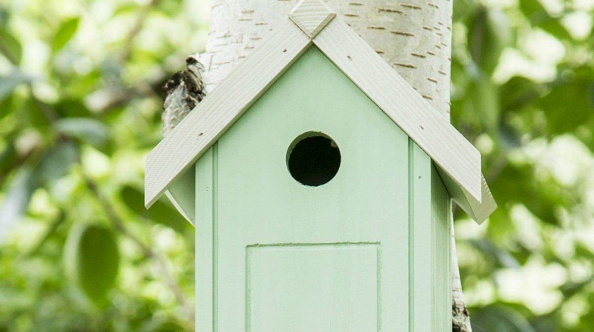 How To Look After Garden Birds In Autumn