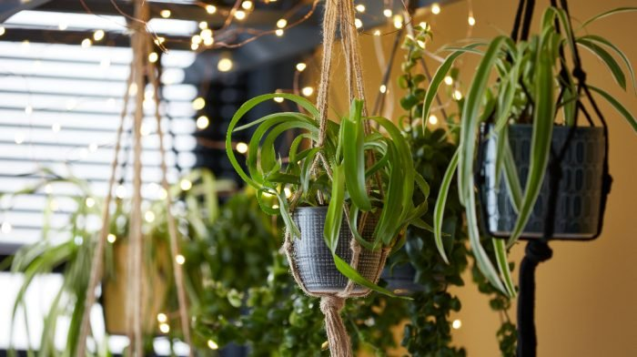 How To Install Floating Shelves and Create a Hanging Bathroom Garden
