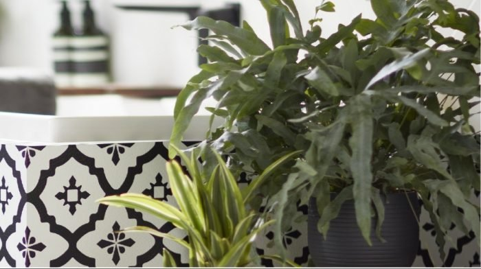 The best houseplants for your bathroom