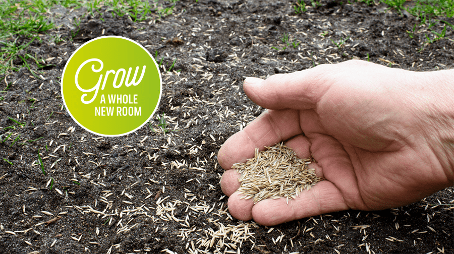 How and When to Sow Grass Seed