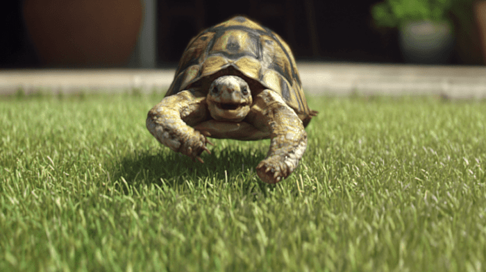Get Your Garden Ready for Summer With Help From Gary the Tortoise
