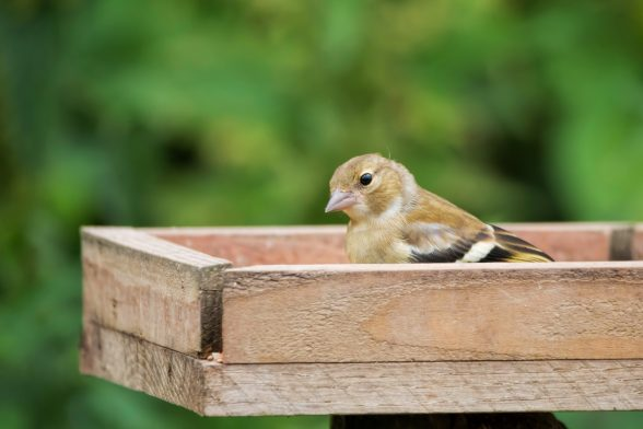 How To Make a Bird Table
