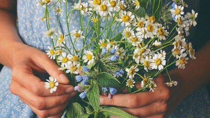 Why We're Crazy For Chamomile And Its Skin Benefits